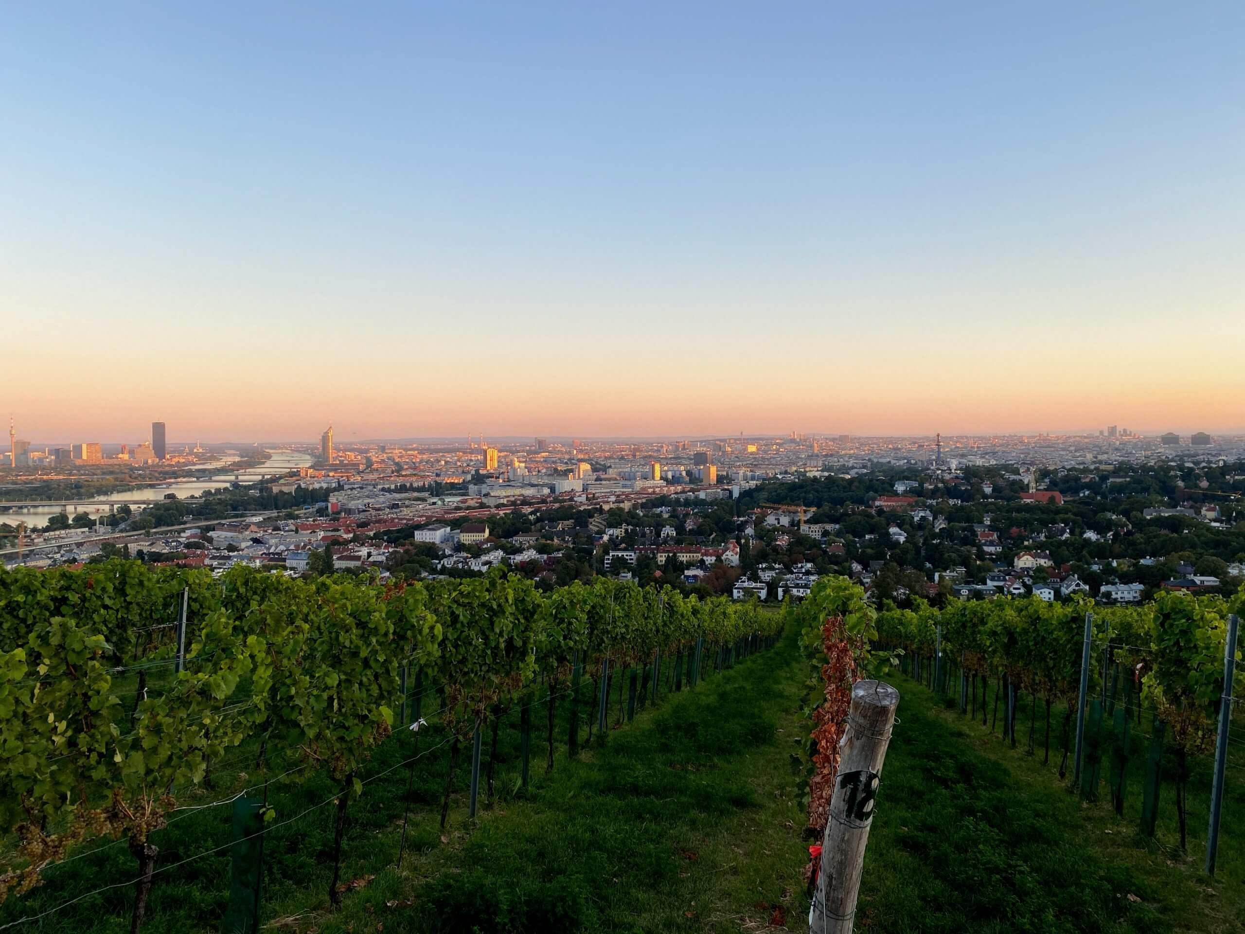 Drilona Wien Aussicht